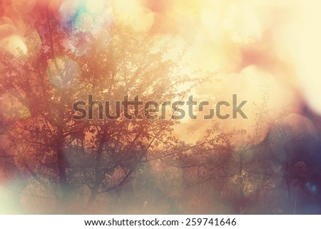 Magic misty in forest - stock photo