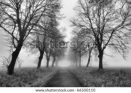 Magic path with a misty fog - stock photo