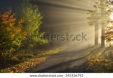 Magical Autumn Forest. - stock photo