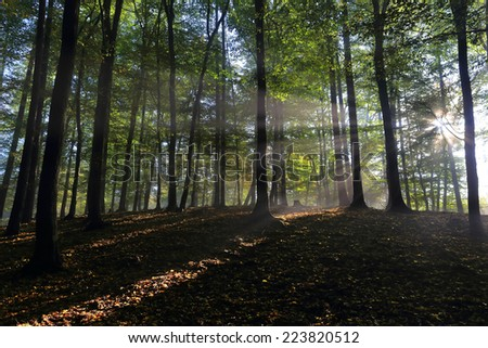 Magical colorful foggy autumn Forest - stock photo