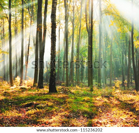 Magical forest at dusk Poland - stock photo