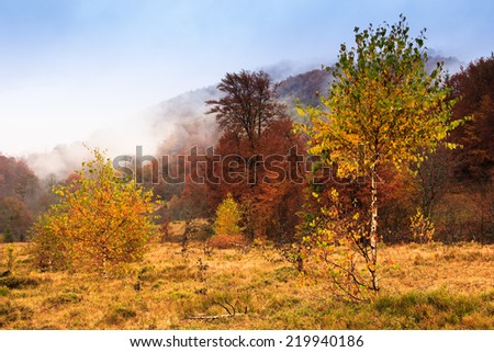 Magical forest in a golden Autumn. Mist mountain landscape.  Filtered image: colorful effect. - stock photo