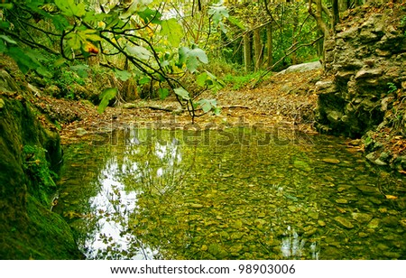 magical forest lake - green surroundings - stock photo