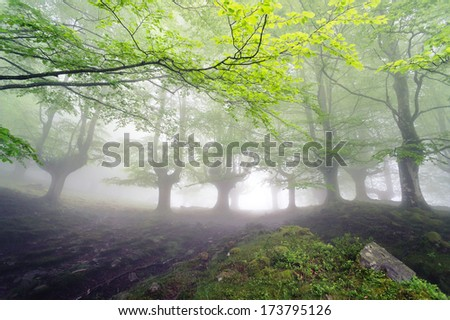 magical forest with fog and beautiful light
