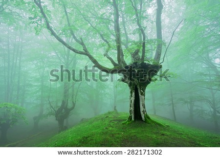 magical forest with fog and sunlight in spring - stock photo