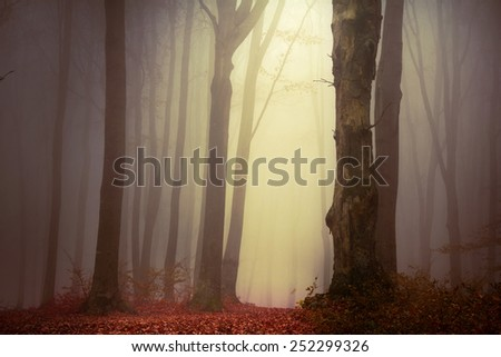 Magical light - stock photo