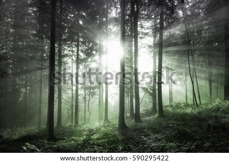Magical olive green colored foggy forest tree landscape with sunlight.