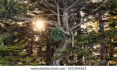 Magical sphere in a lush cedar forest with a sunburst through the trees. - stock photo