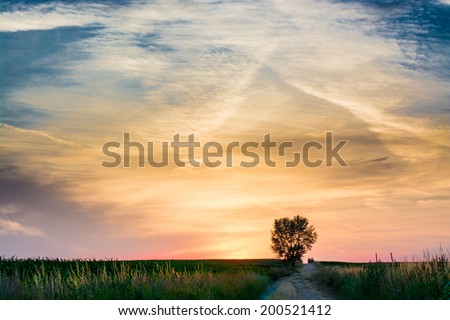 magical sunrise with tree - stock photo