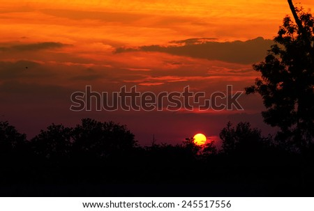 Magical sunset with forest silhouette - stock photo