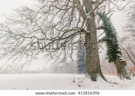 Magical trees in a winter scenery covered with snow - stock photo
