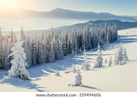 magical winter snow covered tree. Carpathian, Ukraine, Europe. - stock photo