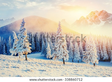 magical winter snow covered tree. Sunset in the Carpathians. Ukraine, Europe - stock photo