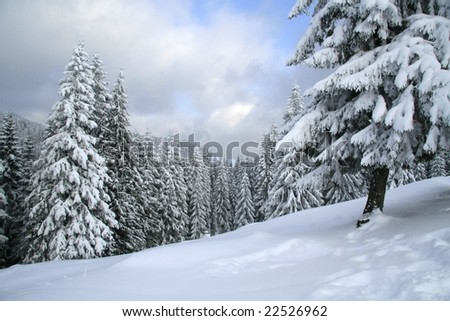 Magical winter woods covered with fresh snow - stock photo