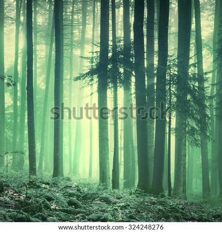 Magical yellow green saturated foggy forest trees landscape. Color filter effect used. Picture was taken in south east Slovenia, Europe.