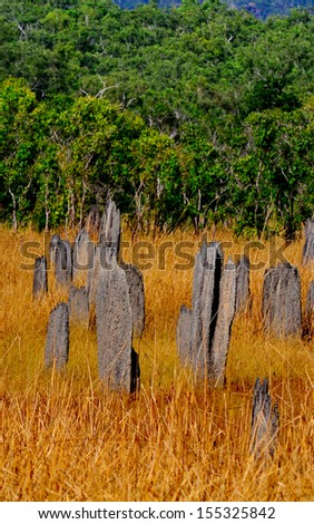 Magnetic Termite Mound in Litchfield National Park, Australia  - stock photo