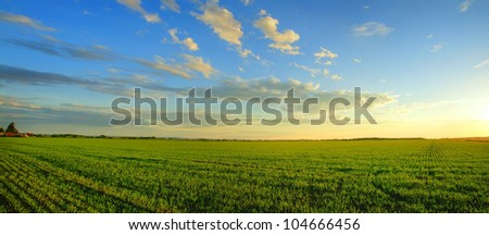 Magnificent panorama of  a sunrise over a newly planted cereal field- beautiful nature, dramatic HDR rendering. - stock photo