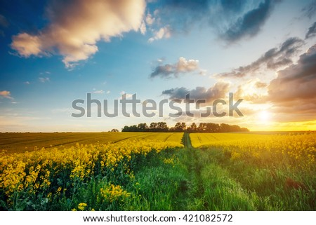Magnificent views of the green grass and canola field glowing by sunlight. Dramatic picture and picturesque scene. Location place Ukraine, Europe. Artistic picture. Beauty world. Soft filter effect. - stock photo