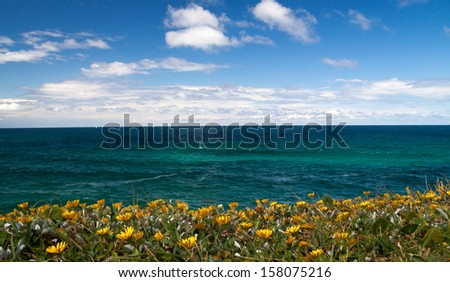 Magnificent yellow flowers on the shoreline leading into tropical waters - stock photo