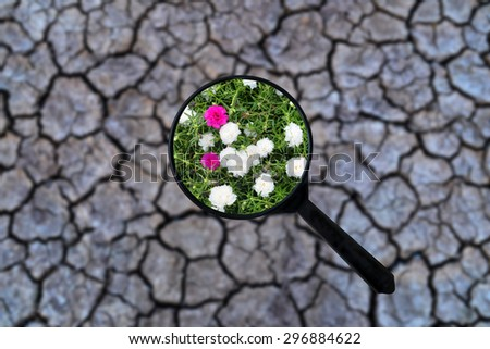 magnifying discover flowers on dry cracked the earth - stock photo