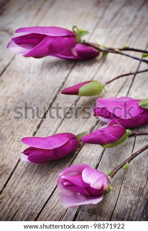 Magnolia Flower on old wooden table - stock photo