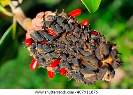 Magnolia in autumn - stock photo