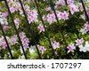 Magnolia Plantation and its Gardens near Charleston in South Carolina with Spring Azaleas blooming on an old plantation - stock photo