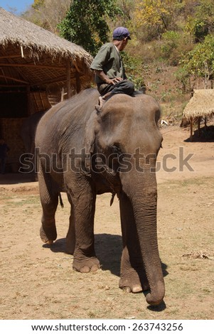 Mahout rides his elephant in the  Elephant conservation camp near Kalaw Myanmar (Burma) - stock photo