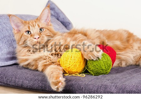 Main Coon cat lying with balls of wool - stock photo