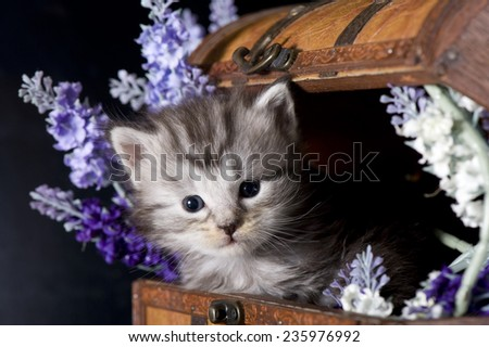 Maine coon kitten     Save to a Lightbox ?              Find Similar Images     Share ?      Maine Coon kitten with flowers
