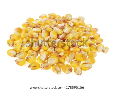 maize grains on white background - stock photo