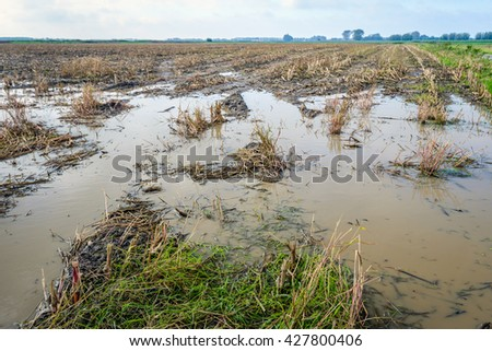 Maize stubble field flooded with large pools of water after abundant rain - stock photo