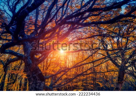 Majestic autumn trees glowing by sunlight. Red and yellow autumn leaves. Dramatic scene. Natural park. Carpathian, Ukraine, Europe. Beauty world. Retro style filter. Instagram toning effect. - stock photo
