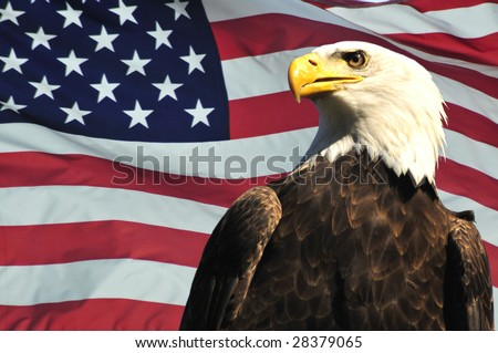 Majestic Bald eagle and USA flag