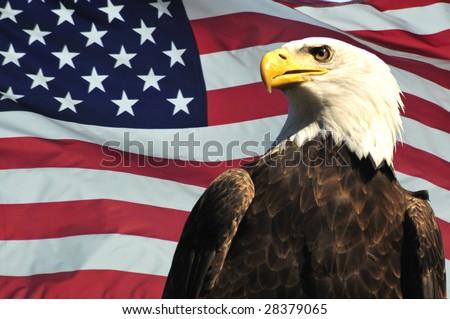 Majestic Bald eagle and USA flag - stock photo