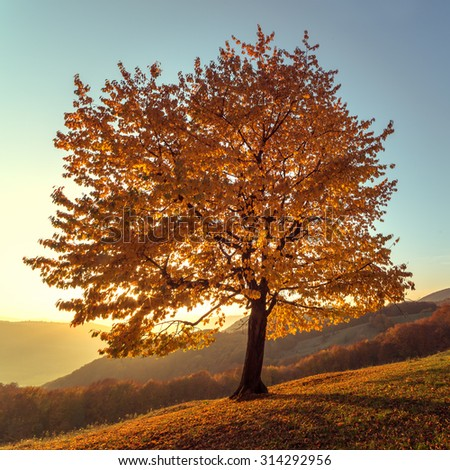 Majestic beech leaves with sunny beams at mountain valley. Dramatic colorful evening scene. Carpathians, Ukraine, Europe.