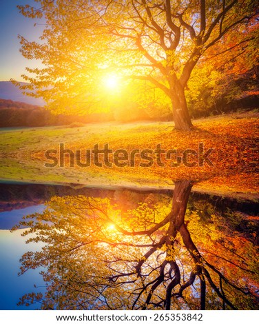 Majestic beech tree on a hill. Dramatic morning scene. Red and yellow leaves. Beauty world. Retro and vintage style. Instagram toning effect. Flip canvas vertical. Double exposure effect. - stock photo