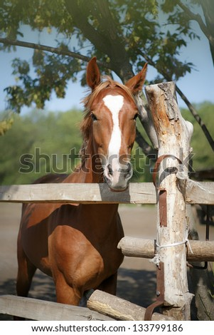 majestic brown horse in stable Brown  horse mare close up head shot - stock photo