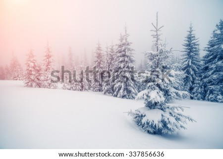 Majestic foggy landscape glowing by sunlight in the morning. Dramatic wintry scene. Location Carpathian, Ukraine, Europe. Beauty world. Retro and vintage style, soft filter. Instagram toning effect. - stock photo