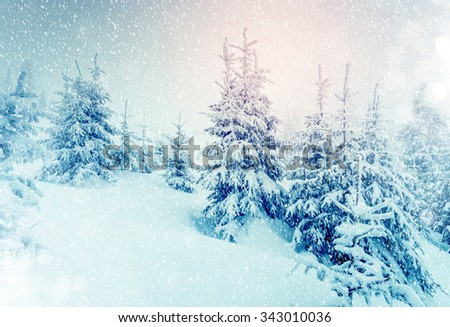 Majestic landscape glowing by sunlight in the morning. Picturesque wintry scene. Location Carpathian national park, Ukraine, Europe. Ski resort. Beauty world. Instagram toning effect. Happy New Year! - stock photo