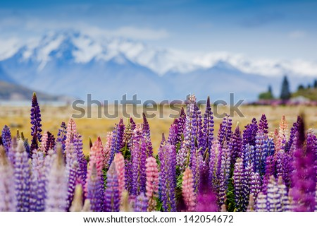 Majestic mountain lake with llupins blooming  - stock photo