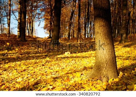 Majestic multicolored forest with sunny beams. Dramatic and picturesque morning scene. Red and yellow leaves.  - stock photo