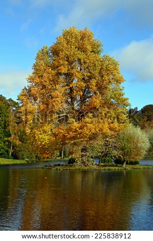Majestic Oak on a lake island during early Autumn in England.