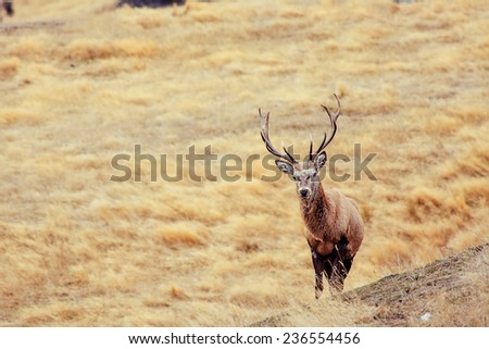 Majestic Red Deer in a park - stock photo