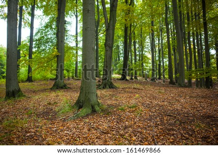 Majestic shot of tree trunks in the forest - stock photo