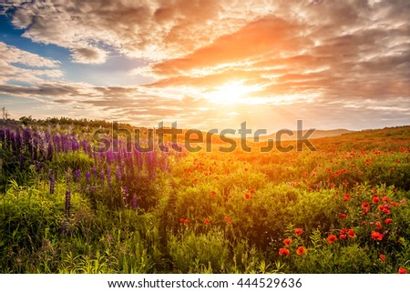 majestic sunset. Fantastic evening with flowering hills in the warm sunlight in the twilight. dramatic sky. beautiful morning scene. wonderful blooming field. soft selective focus - stock photo