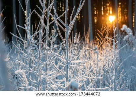 Majestic sunset in the winter forests landscape - stock photo