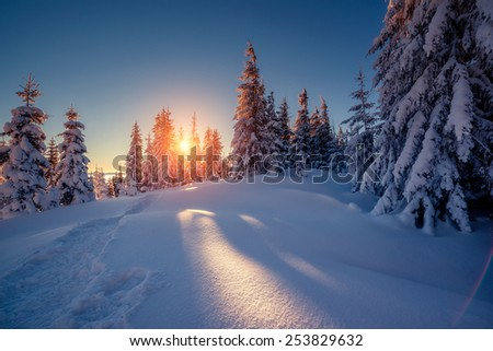 Majestic winter landscape glowing by sunlight in the morning. Dramatic wintry scene. Carpathian, Ukraine, Europe. Beauty world. Happy New Year! - stock photo