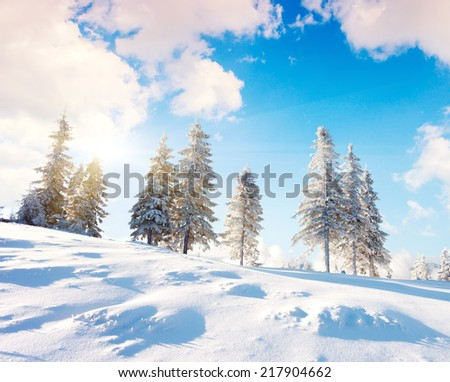 Majestic winter landscape over blue sky. Dramatic wintry scenery. National Park Carpathian, Ukraine, Europe. Beauty world. Happy New Year! - stock photo