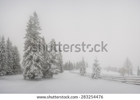 Majestic winter landscape with trees in snow - stock photo